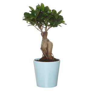 GARDENLINE®  Tropischer Pflanzen-Mix
