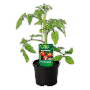 Finest Garden Gemüsepflanze