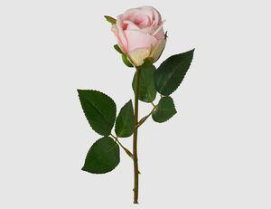 Einzelblume Rose rosa