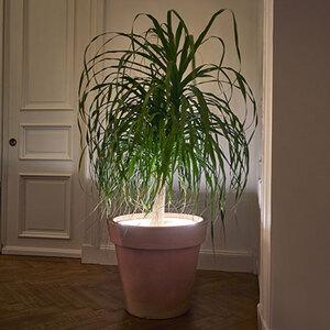LED-Pflanzenbeleuchtung1