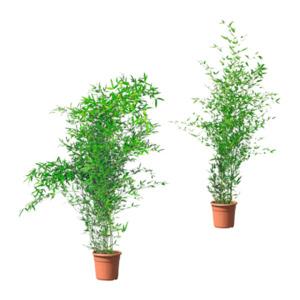 GARDENLINE     Bambussortiment