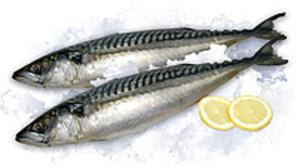 Makrelen mit Kopf (Scomber scombrus) ausgenommen, tiefgefror...