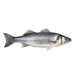 GOLDEN SEAFOOD Wolfsbarsch 300 g