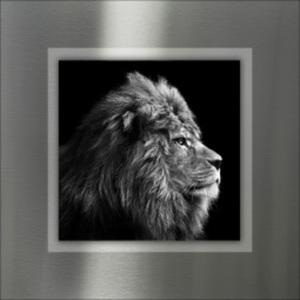PRO ART Alu-Art Bild GREY LION HEAD 50 x 50 cm