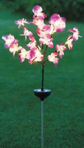Garden Dream Solar-Orchidee