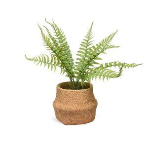 Topfpflanze Farn