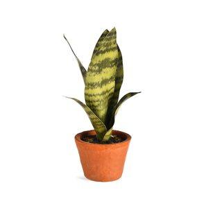 Kunstpflanze Bogenhanf im Topf