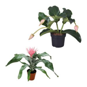 GARDENLINE     Exotische Blühpflanze