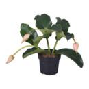 Bild 4 von GARDENLINE     Exotische Blühpflanze