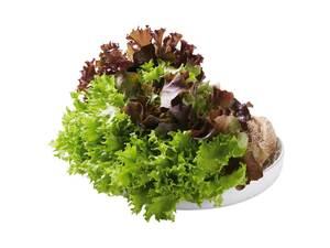 Multicolor-Salat mit Wurzeln