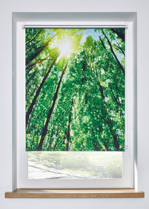 Verdunkelungsrollo Digitaldruck Bäume