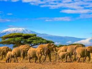 Tansania & Kenia – Rundreise & Baden