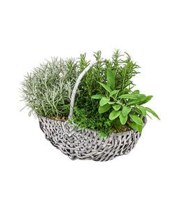 Bepflanzter Korb mit Kräutern, 30 cm