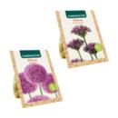 Bild 1 von GARDENLINE     Blumenzwiebeln Zierlauch