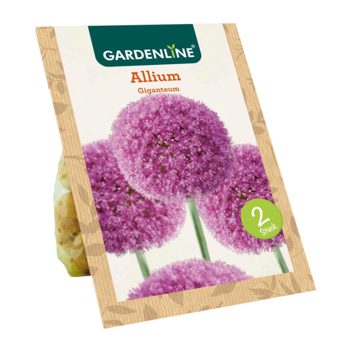 Bild 3 von GARDENLINE     Blumenzwiebeln Zierlauch