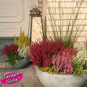 Knospenheide Gardengirls®, 6er-Set