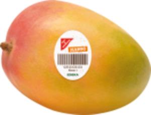 Israel Gut & Günstig Mango