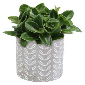 GARDENLINE®  Pflanze in Trendkeramik