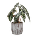 Bild 2 von GARDENLINE     Pflanze in Trendkeramik