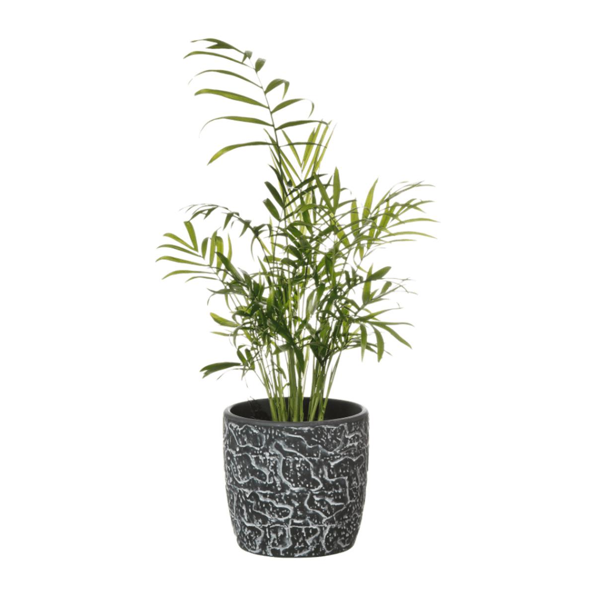 Bild 3 von GARDENLINE     Pflanze in Trendkeramik