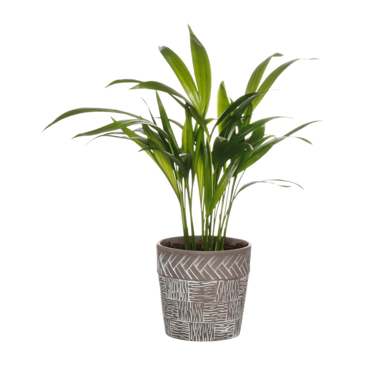Bild 4 von GARDENLINE     Pflanze in Trendkeramik