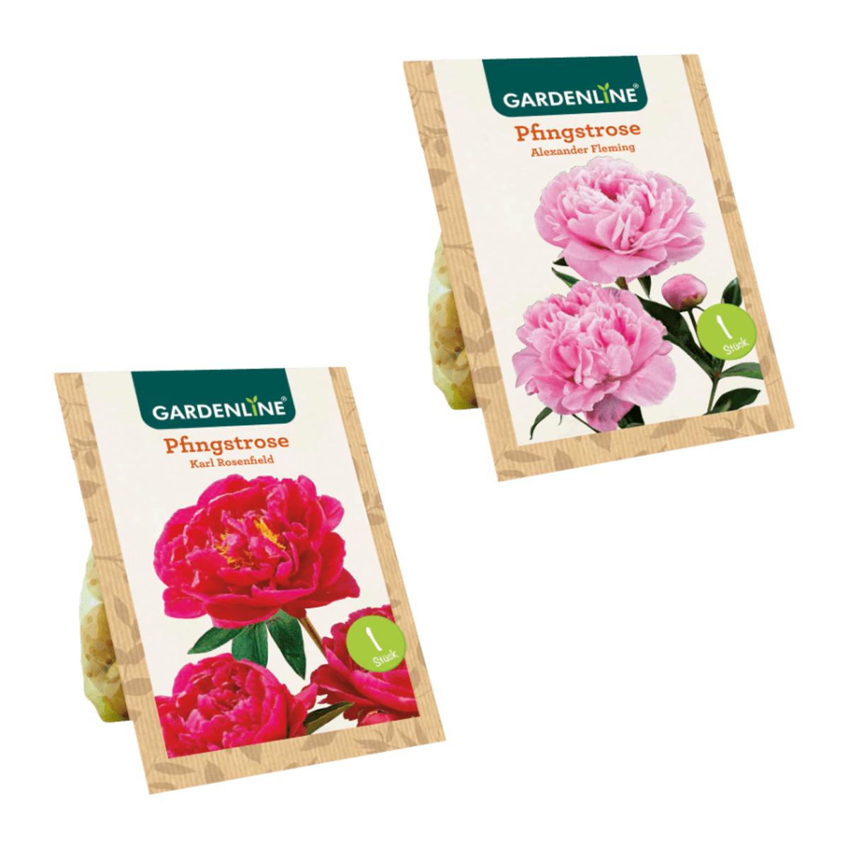 Bild 1 von GARDENLINE     Premium-Pfingstrosenknolle