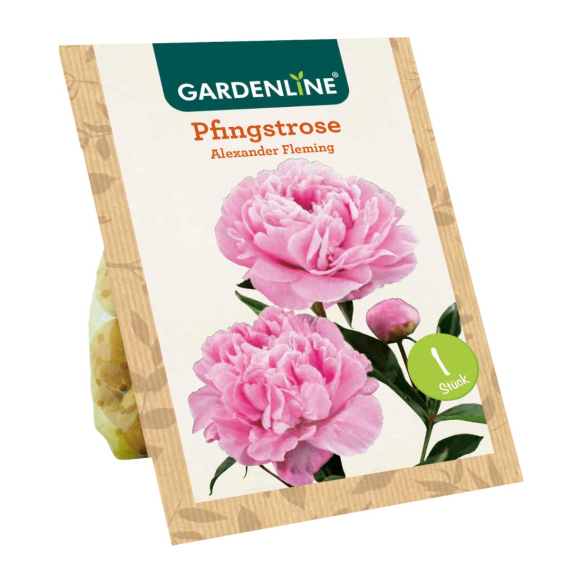 Bild 2 von GARDENLINE     Premium-Pfingstrosenknolle