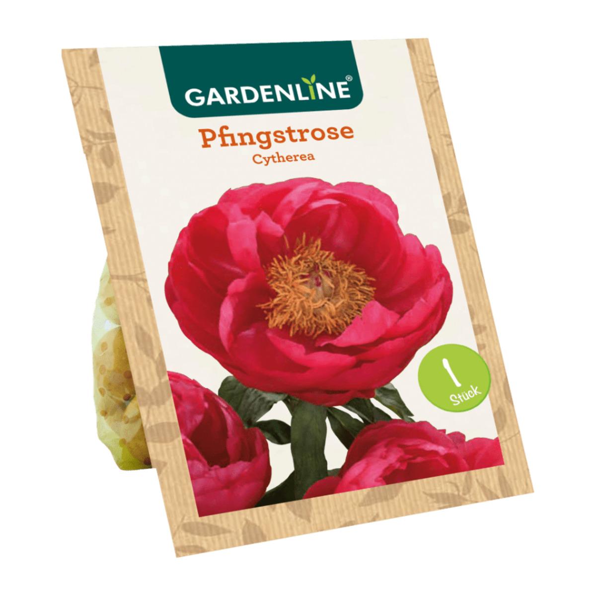 Bild 5 von GARDENLINE     Premium-Pfingstrosenknolle