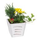 Bild 4 von GARDENLINE Bepflanztes Holzgefäß
