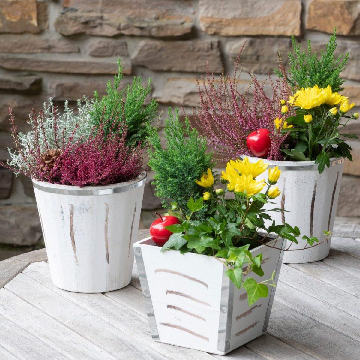 Bild 5 von GARDENLINE Bepflanztes Holzgefäß
