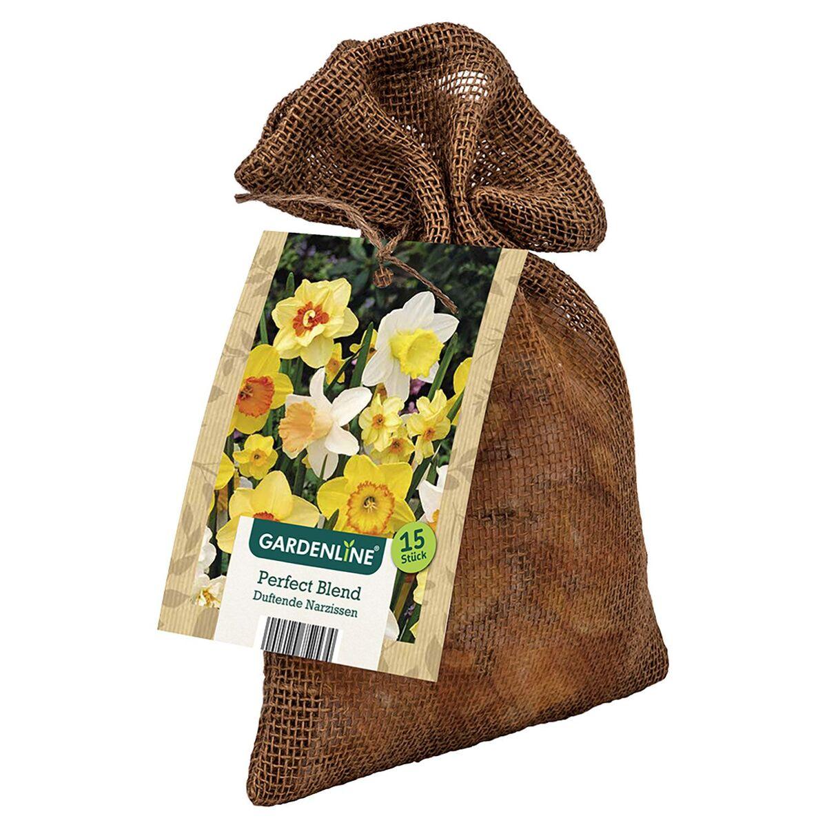 Bild 2 von GARDENLINE®  XL-Frühlingsblumenzwiebeln im Jutebeutel
