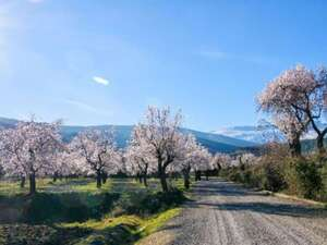 Mallorca – Standortrundreise zur Mandelblüte