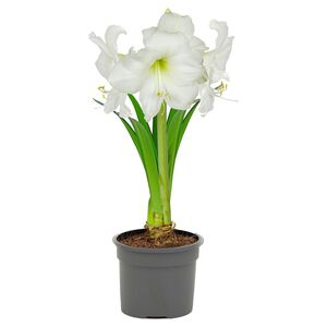 GARDENLINE®  Blühgaranten-Pflanzenmix
