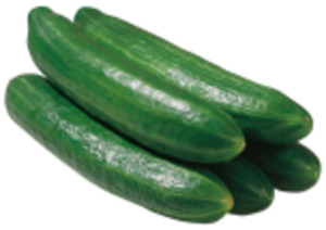 Spanien Bio-Salatgurken