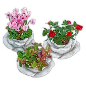 Bepflanzte Steinrose