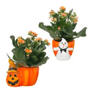 GARDENLINE     Bepflanzte Halloween-Keramik