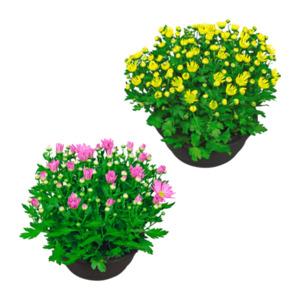 GARDENLINE     Chrysanthemenschale